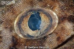 Pigmy wobbegong shark eye wide open... taken using a 105m... by Gaetano Gargiulo