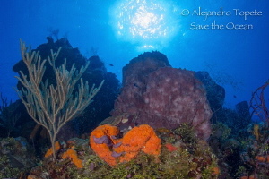 Reef with Sun, Cozumel Mexico by Alejandro Topete