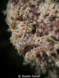 Frogfish by Beate Seiler