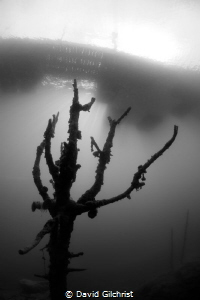 Tree in flooded quarry, Lake Rawlings,VA by David Gilchrist