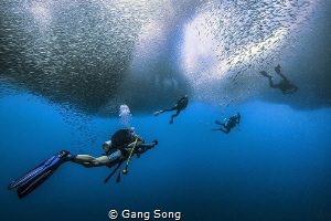 divers under the rolling sardine strom by Gang Song
