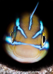 Fang Blenny, portrait by Marco Fierli