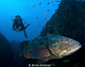 Big Daddy by Brian Welman