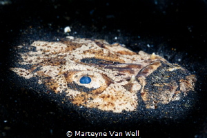 Stargazer trying to hide in the sand at TK3 in Lembeh by Marteyne Van Well
