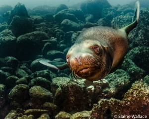 Really cold water, dodgy vis, but a great new dive buddy!... by Elaine Wallace