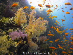 Soft Coral with Anthias explosion #2 by Cinzia Bismarck