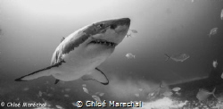 Great shark.  Picture was taken with a sony nex 5 and na... by Chloé Marechal