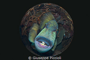Smoker's Smiling by Giuseppe Piccioli