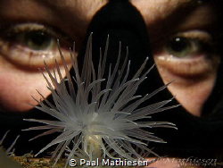 sea ​​anemone and eyes by Paal Mathiesen