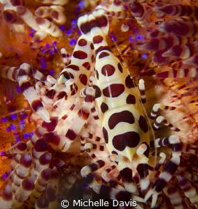 Coleman Shrimp - Nikon D7000 1/320 f/14 ISO 100 Single St... by Michelle Davis