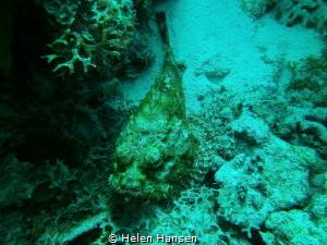 Stone fish by Helen Hansen