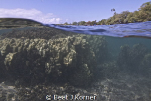 Looking at two worlds with one shot - coral garden and be... by Beat J Korner
