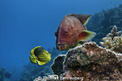 """Out of the way, here I come  NIKON D7000 in a Seacam """"P... by Thomas Bannenberg"""