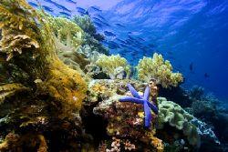 Wakatobi Reef Scene by Karl Dietz