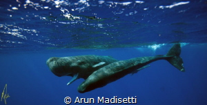 Male and female, taken under permit by Arun Madisetti