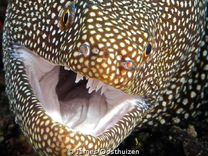 Moray allowing me to get up close and personal by James Oosthuizen