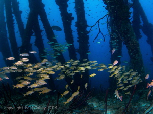 fish schools at salt pier, Bonaire by Paul Colley