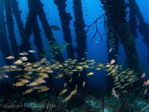 fish schools at salt pier, Bonaire by Paul Colley