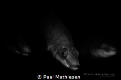 BLACK by Paal Mathiesen