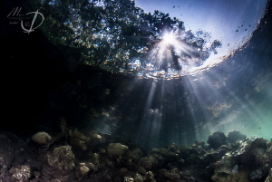MANGROVE BEAMS