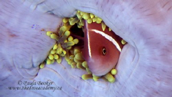 """Snug as a Bug"" Apo Island, Philippines. by Paula Booker"