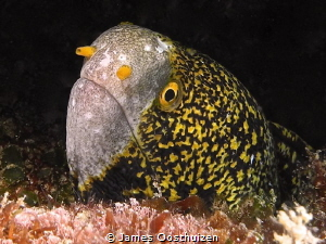 """Tight Lipped"" Moray by James Oosthuizen"