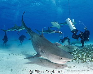 Bow down Emma