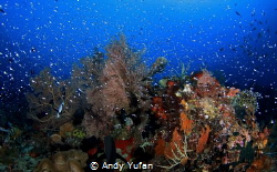 Raja ampat by Andy Yufan