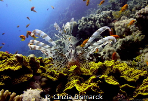 Close to the lion
