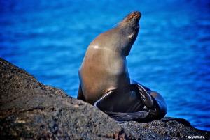 Sea Lion sunbading, Galapagos Islands Nikon D80, Lense A... by Margriet Tilstra