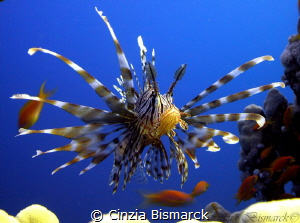 Close to the lion #2