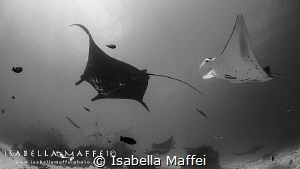 """I'LL SEE YOU AT MANTA POINT""