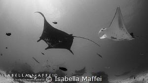 """""""I'LL SEE YOU AT MANTA POINT"""" Raja Ampat, Wai Island  by Isabella Maffei"""