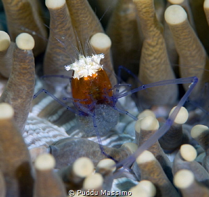 With eggs..,Gangga island,nikon d800e,105 micro by Puddu Massimo
