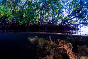 Mangrove Life by Mona Dienhart