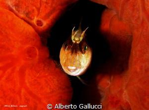 The curtain opens by Alberto Gallucci