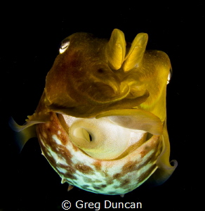 Close focus wide angle cuttlefish by Greg Duncan