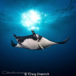 """Manta"" Waited till dusk to get this lighting. Was just h... by Craig Dietrich"