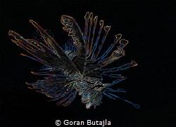 lion from marsa shagra by Goran Butajla