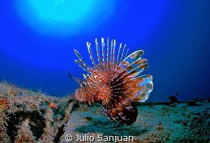 Lionfish in a Wreck by Julio Sanjuan