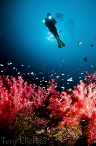 Trail of Soft Corals by Tony Cherbas
