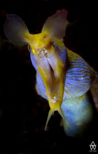 Ribbon Eel image taken on Hop Scotch, in Sodwana, South A... by Allen Walker