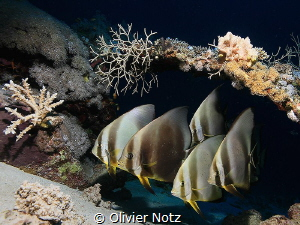 While waiting for my turn to photograph a frog fish, I di... by Olivier Notz
