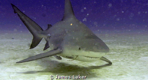 The one that got away! Hooked Bull Shark! by James Laker