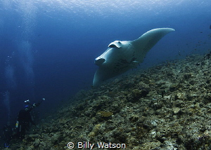 Circling Back Around -- Manta Ray by Billy Watson