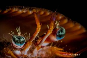 Hermit Crab by Marco Gargiulo