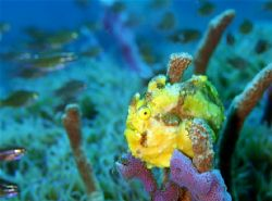 frogfish, f100 and 60mm by Gregory Grant