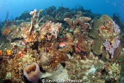 Beautiful St. Lucia Reef.......Canon 5D MK II, Ikelite ho... by Kevin Robert Panizza