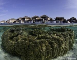 House reef split by Petteri Viljakainen