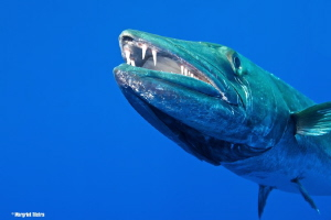 Teeth Nikon D80 with Tamron SP AF 17-50mm f/2.8 (A16), f... by Margriet Tilstra